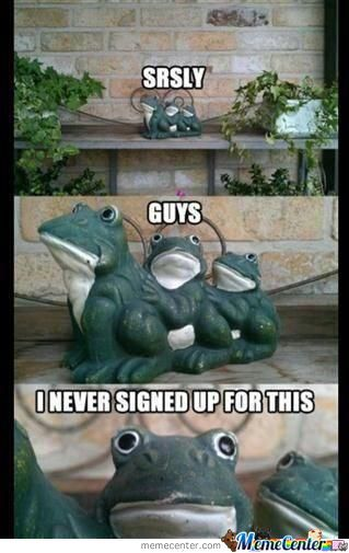 This Frog Has A Point.
