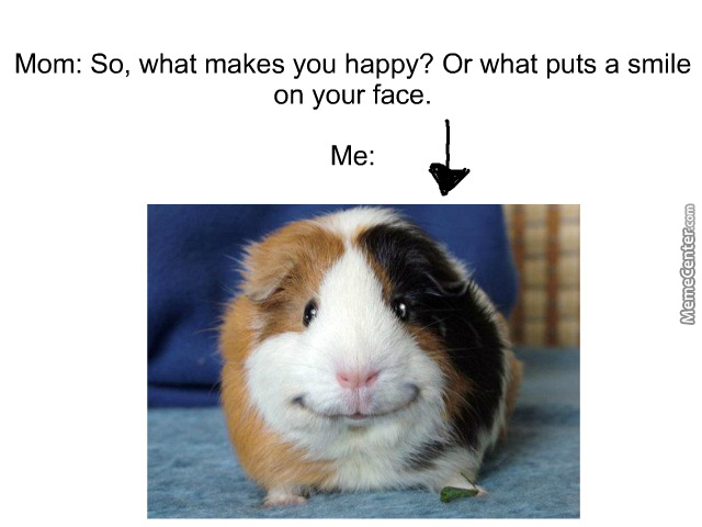 This Guinea Pig Just Makes Me Smile By Recyclebin Meme Center