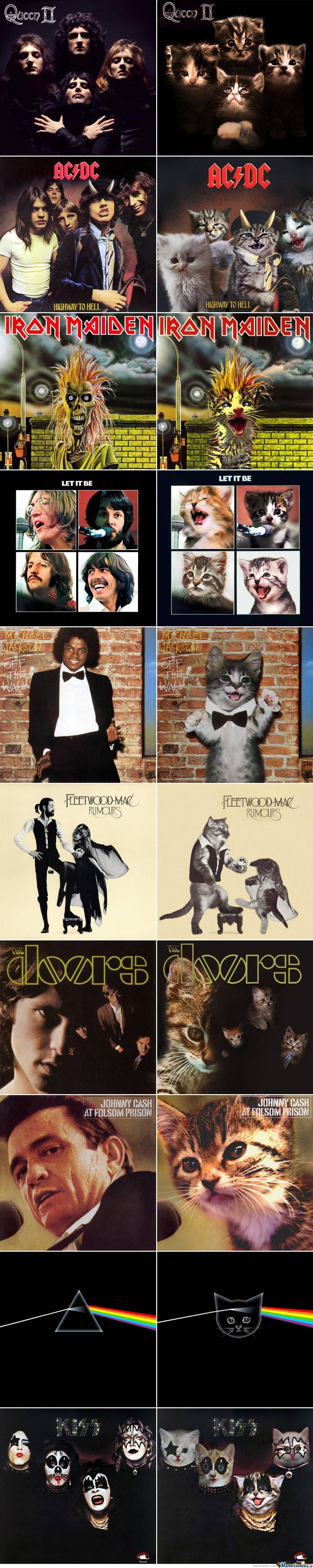 10 classic album covers recreated with kittens
