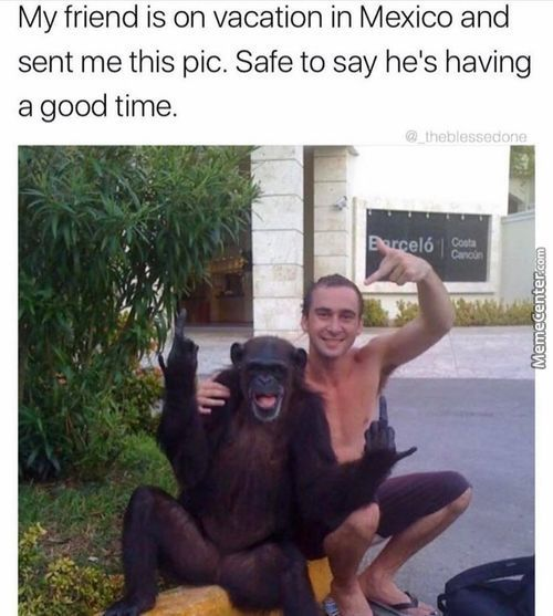 This Monkey Is A Bigger Hustler Than Me
