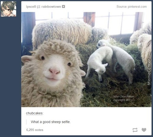 This Sheep Looks So Pretty