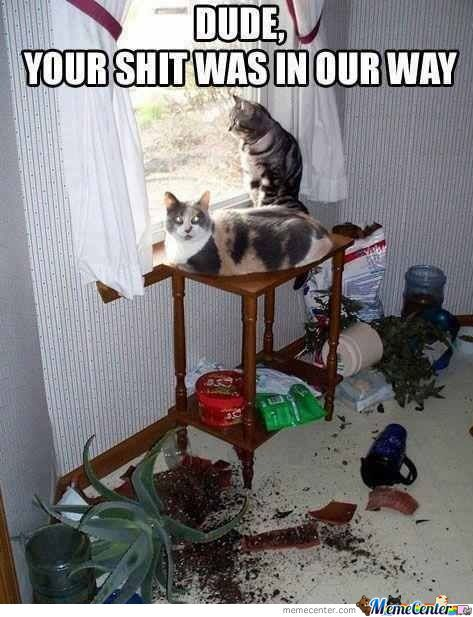 Those Cats
