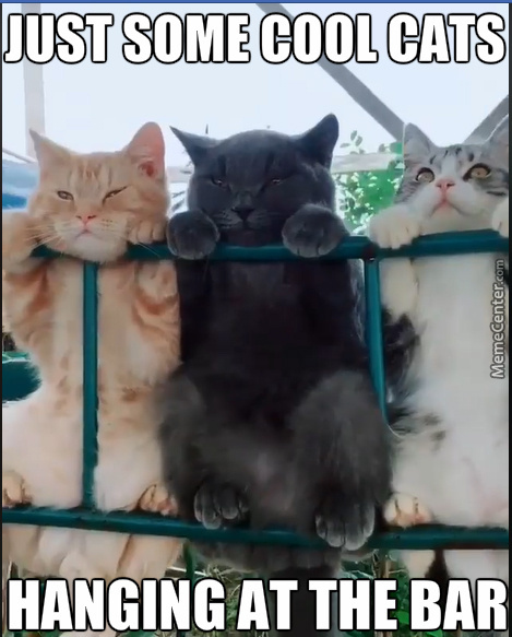Three Cats Walk Into A Bar And Order Cocktails With The Rest On The Side