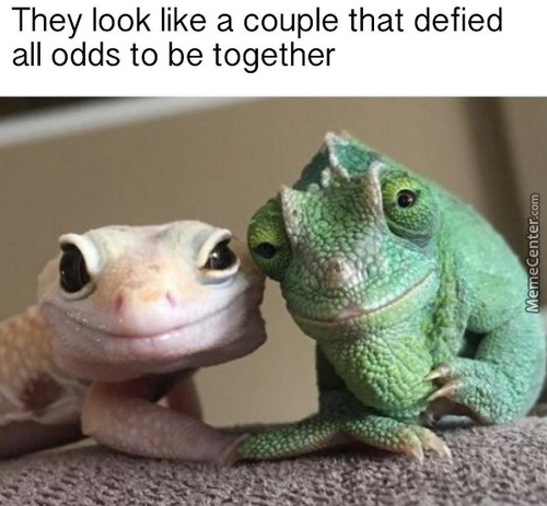 till death do us part_c_7190673 gecko memes best collection of funny gecko pictures