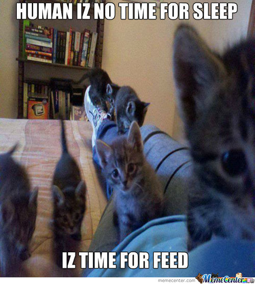 Time For Feed!