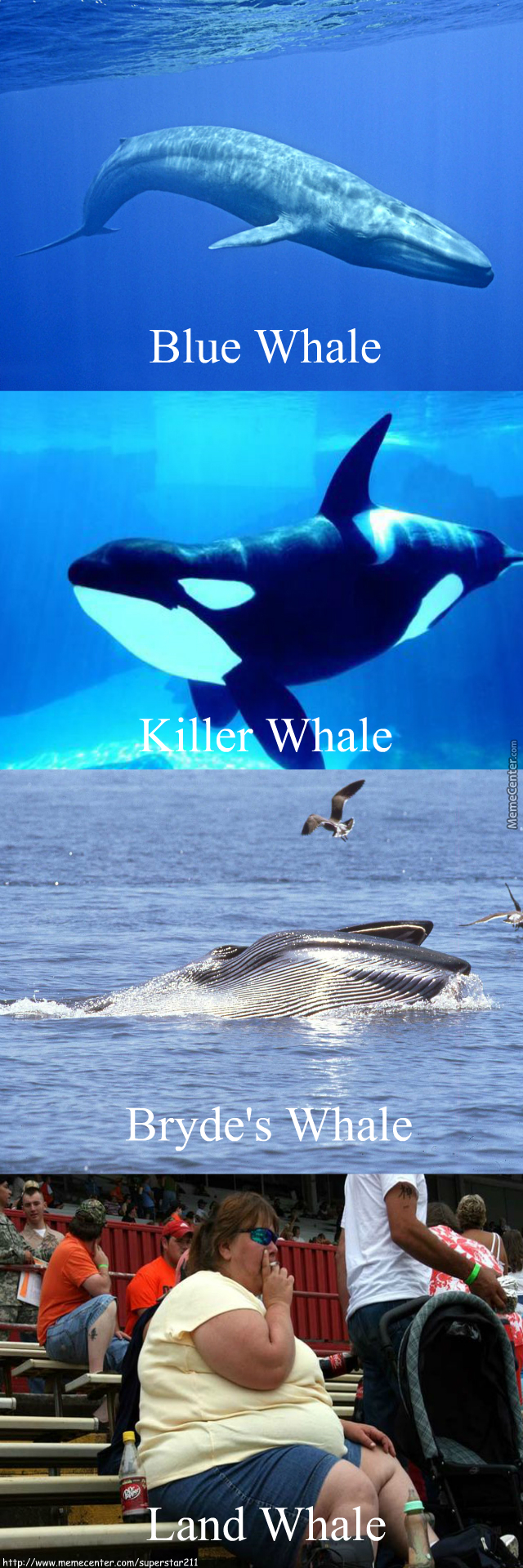 Today Kids We Are Going To Talk About Whales!