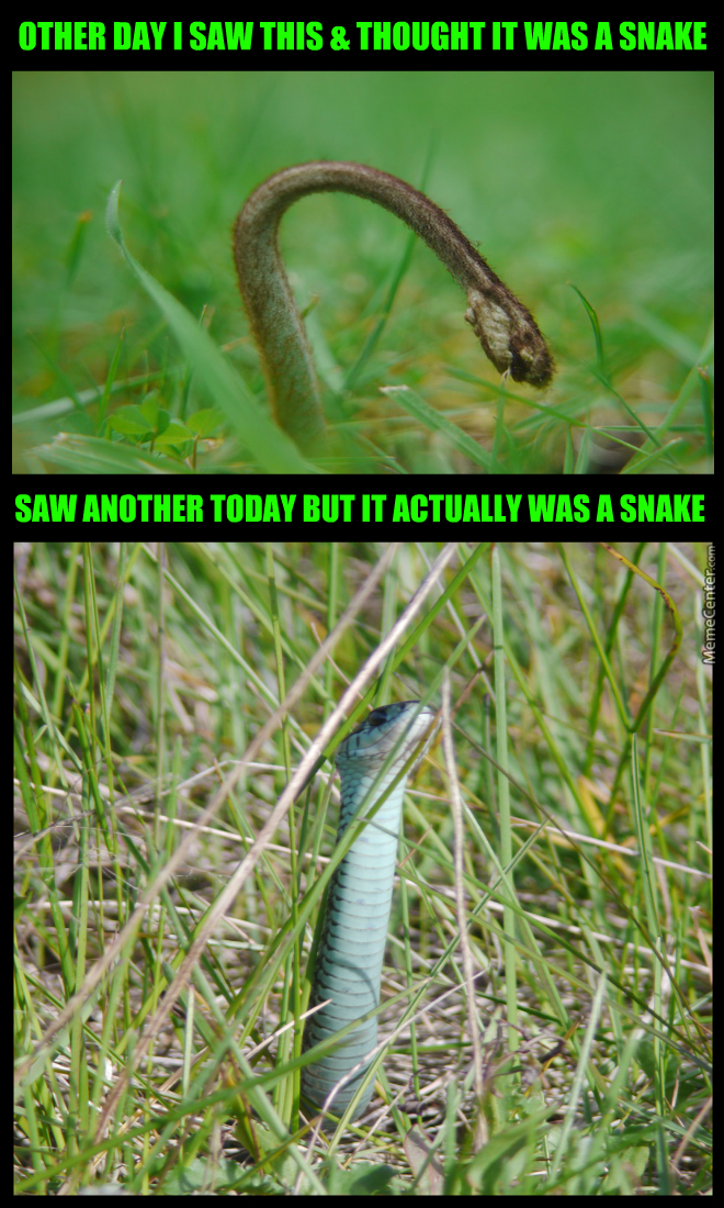 Trust Issues 72483 Snakes Growing All Over The Lawn By