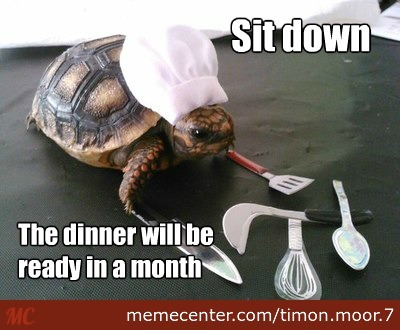 turtle chef_o_2702561 turtle memes best collection of funny turtle pictures