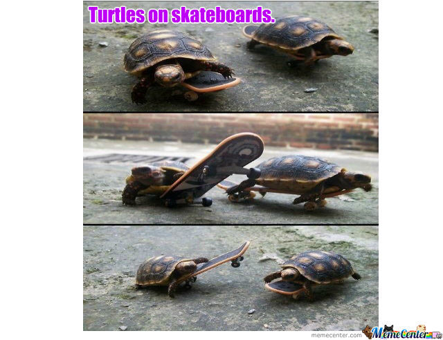 Turtles On Skateboards