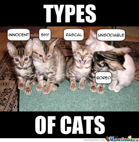 types of cats_o_1590969 types of cats by xchris00 meme center