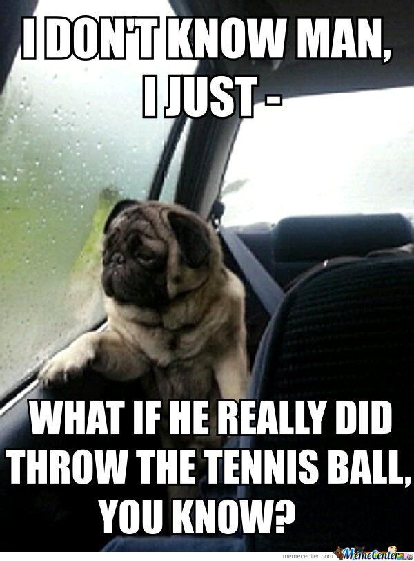 upset dog is upset_o_784188 upset memes best collection of funny upset pictures