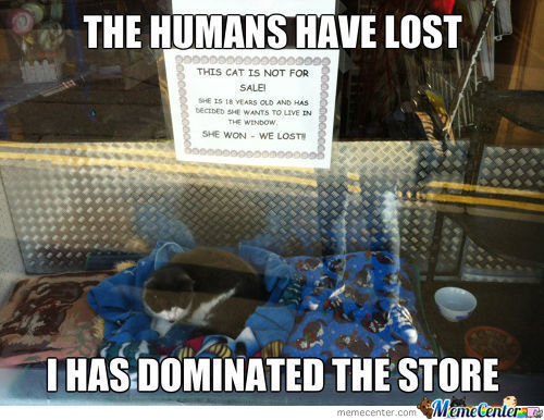 victory_c_2294403 store memes best collection of funny store pictures