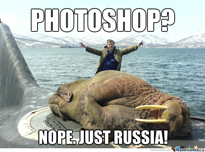 Walrus Memes Best Collection Of Funny Walrus Pictures