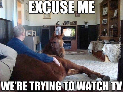 We're Watching A Horse Documentary