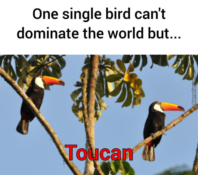 We Must Be Afraid Of Toucans...