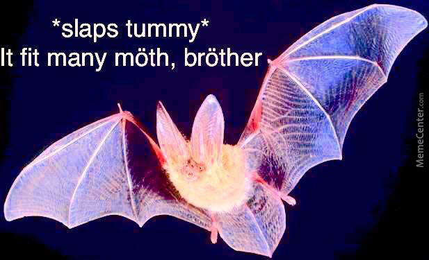 We Need Bäts To Control The Natural Evolution Of Möth Memes