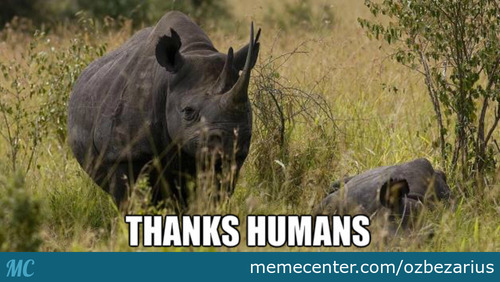 Western Black Rhino Officially Declared Extinct
