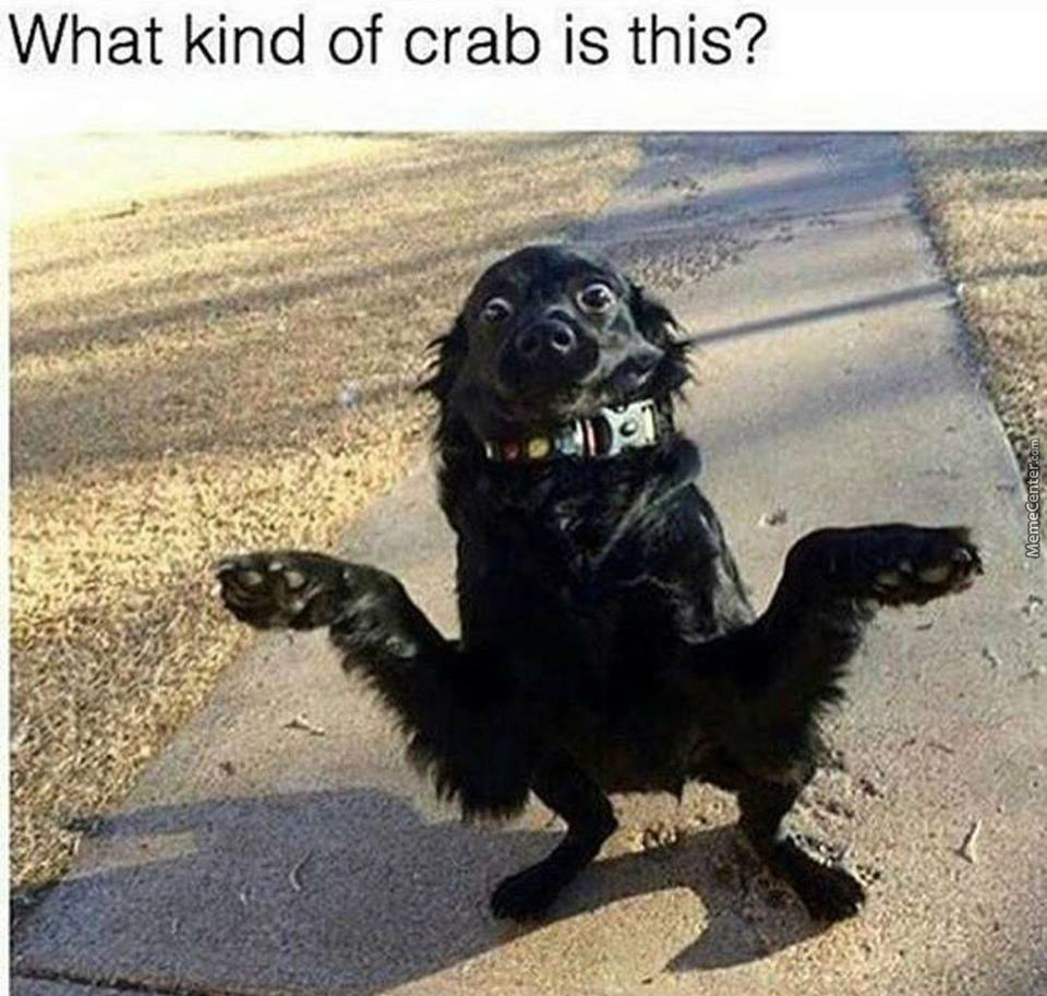 What's Wrong With My Crab