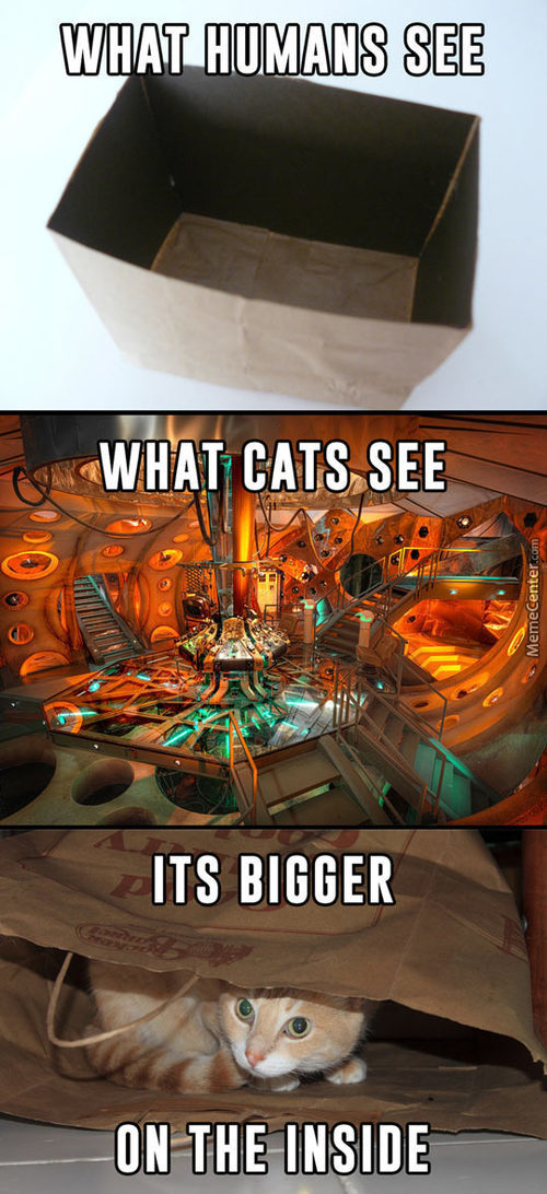 What Cats See In A Paper Bag