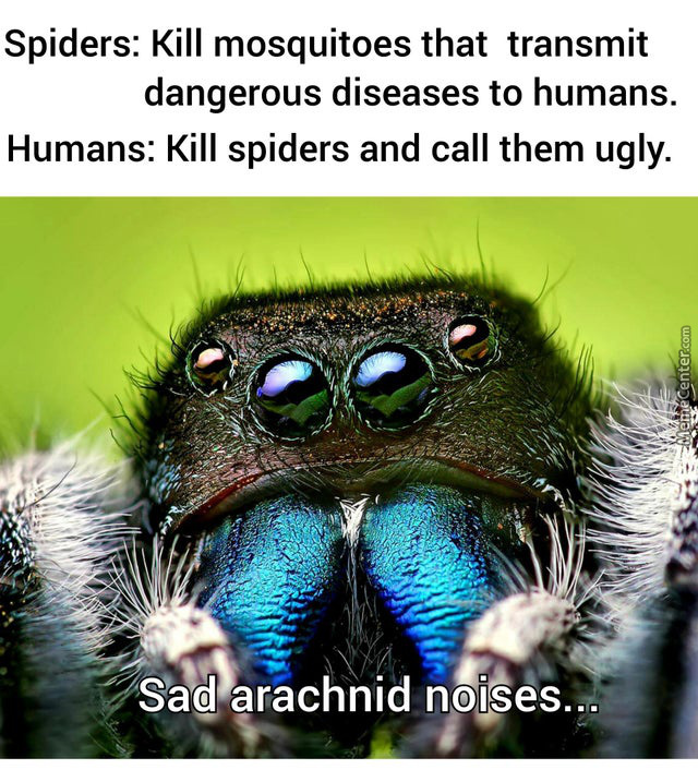 What Do Spiders Eat? ... Just Check The Web :))