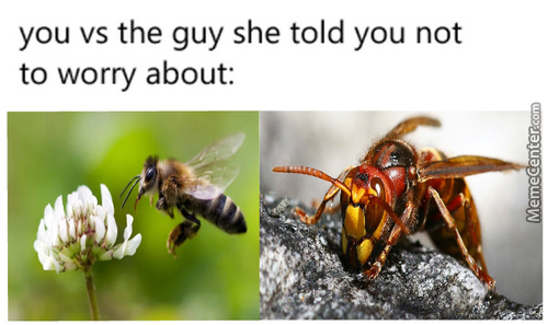 What Do You Call A Wasp?