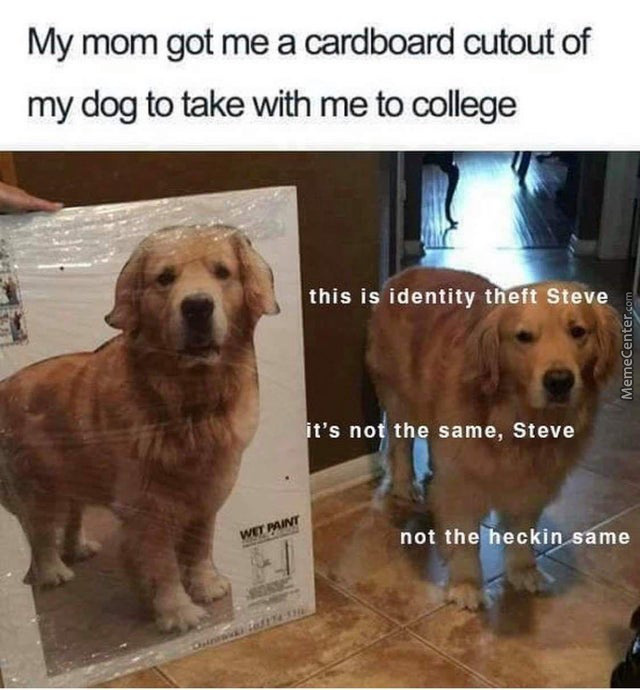 What Have You Done, Steve
