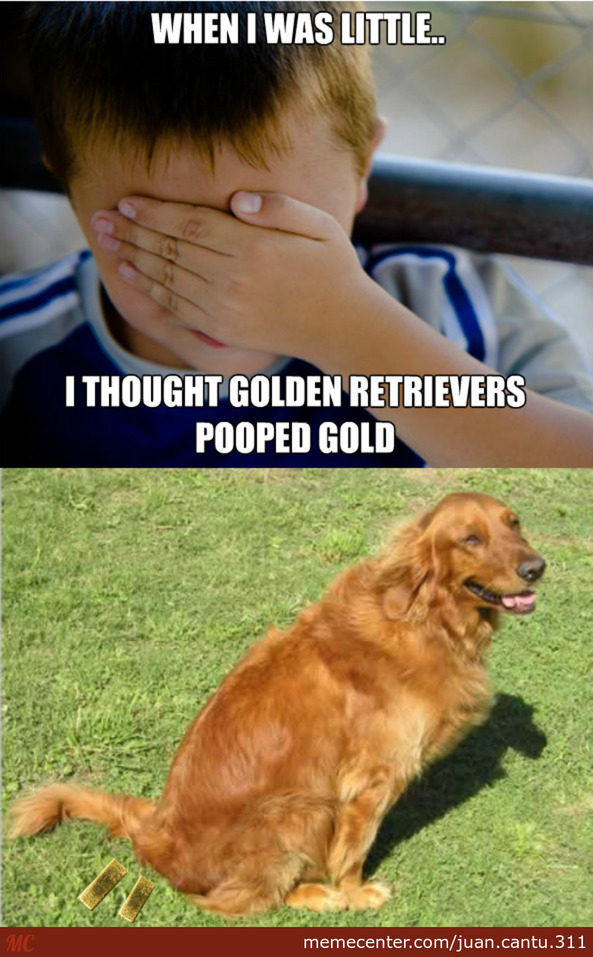 What I Thought Golden Retrievers Did, When I Was Little..
