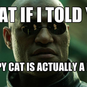 what if i told you about grumpy cat_fb_1190245 what if i told you about grumpy cat? by recyclebin meme center,What If I Told You Meme