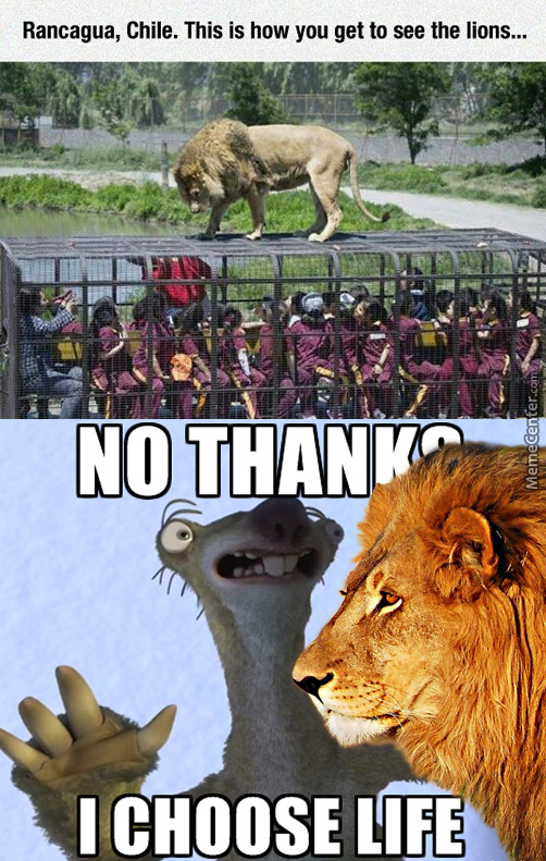 What If The Lion Took A Dump Off That Roof