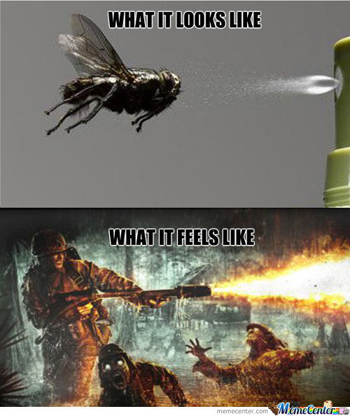 What It Feels Like To Spray A Fly