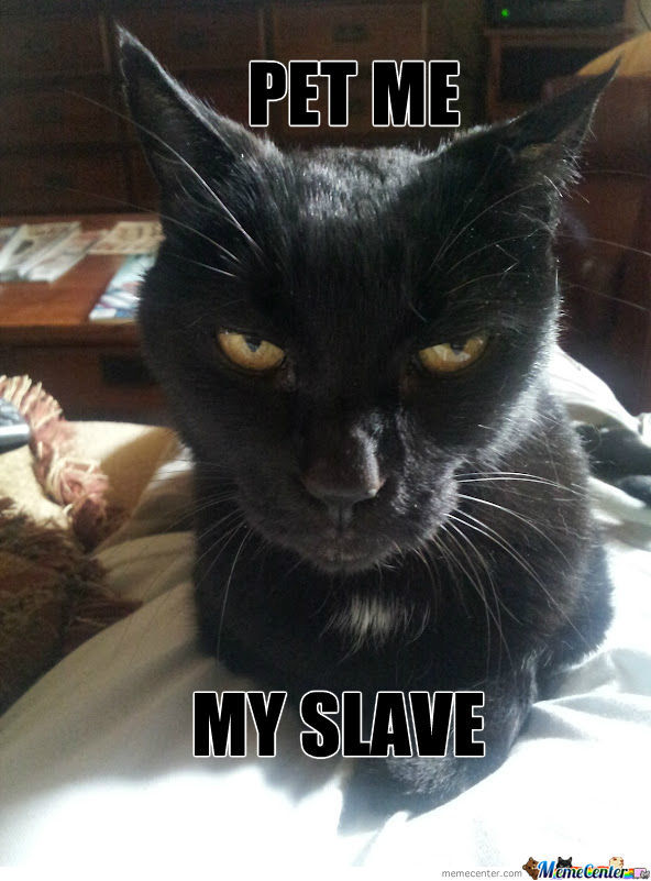 What My Cat Is Thinking
