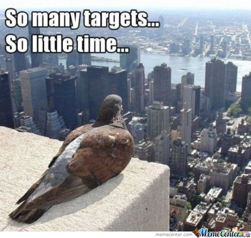 What Pigeons Really Think!