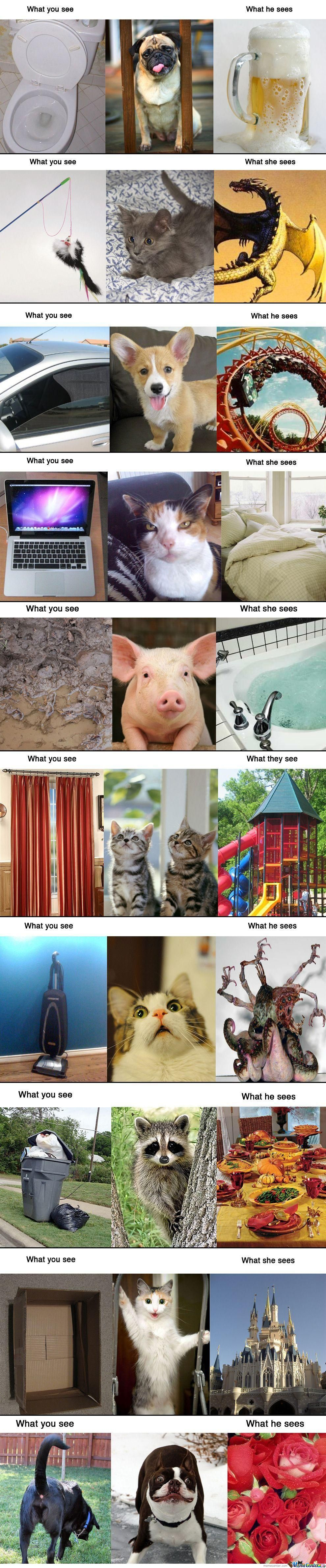 What We See,what Animals See.