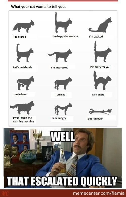 What Your Cat Wants To Tell You