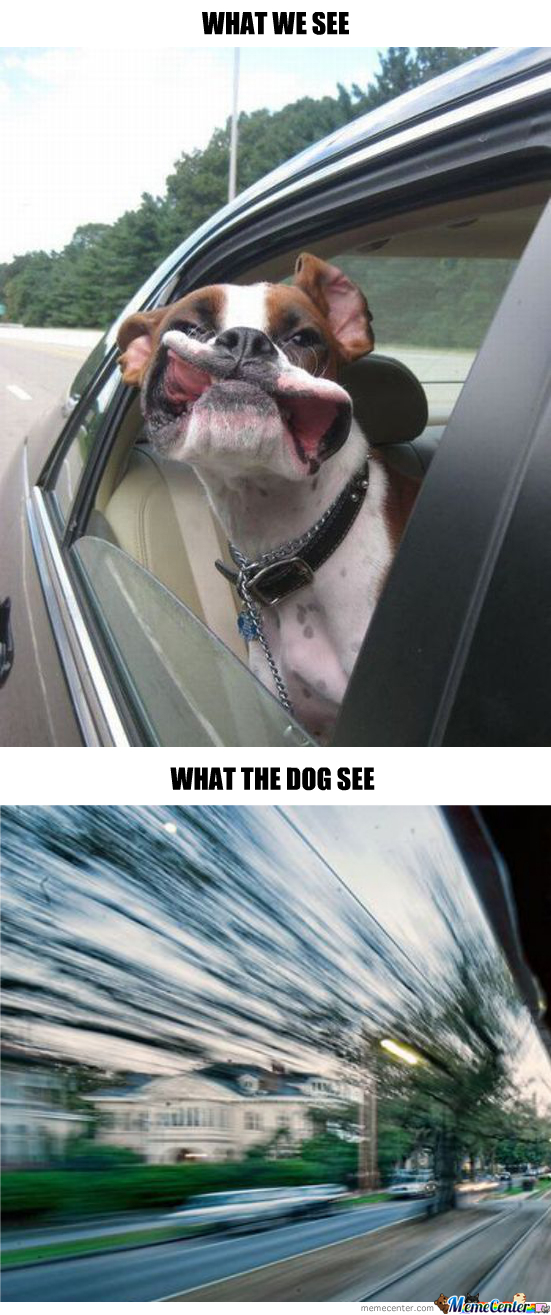 When A Dog Stick His Head Out Of Car Window