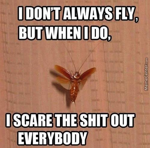 When I Fly