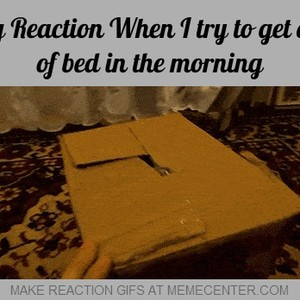 when i try to get out of bed in the morning_fb_1219864 when i try to get out of bed in the morning by reactiongifs meme