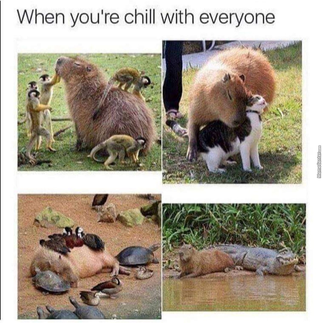 When You Are Chill With Everyone