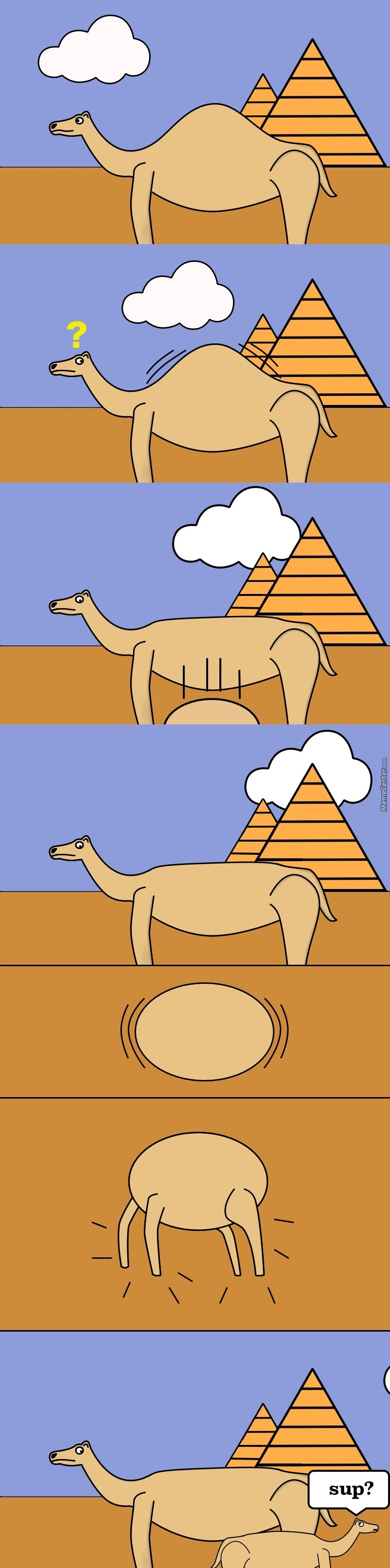 Where Camels Come From