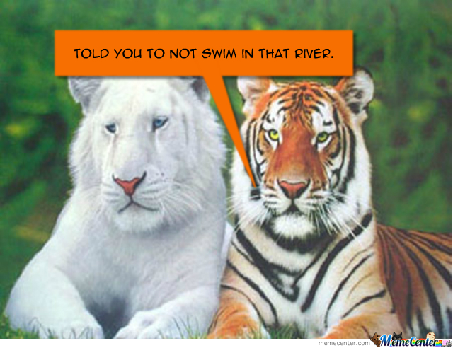 white tiger now by recyclebin meme center