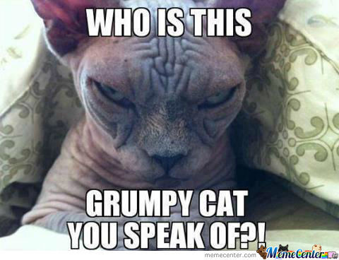 Who Is This Grumpy Cat You Speak Of?!