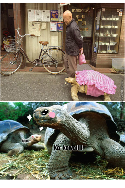 Who Makes Dresses For Tortoises?