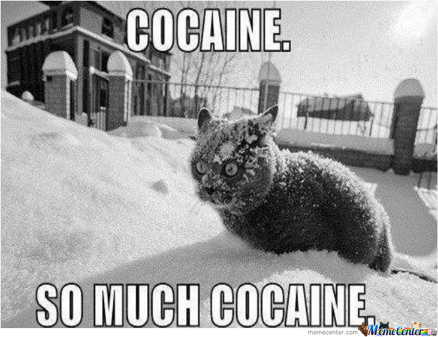 who said cats can amp 039 t get high_o_2109037 who said cats can't get high by roguesithlord meme center