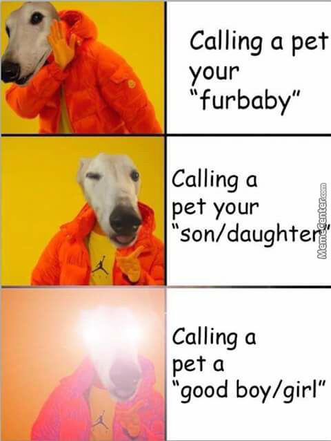 Whomst Is A Good Boy