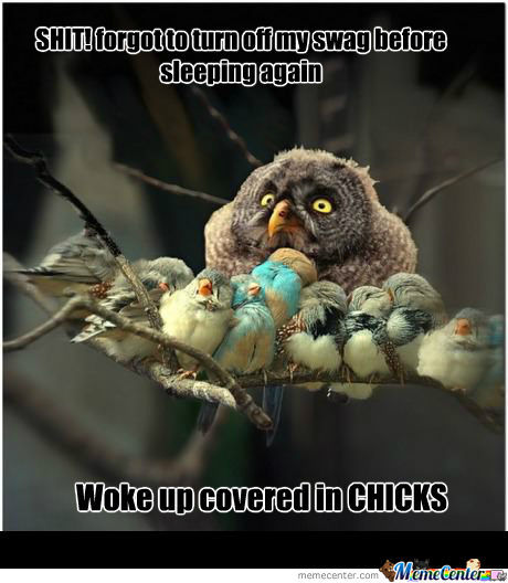 Woke Up Covered In Chicks