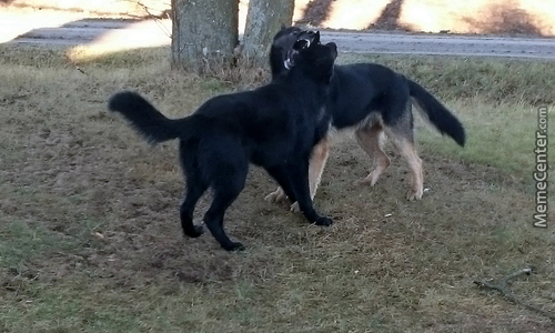 Wolves Playing ^..^
