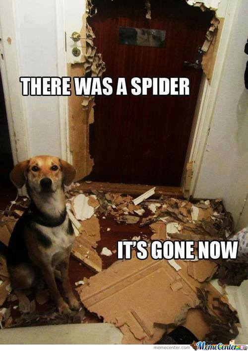 Wow.. Doge Scared Of Spider.. Wow