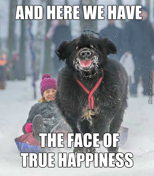 Wow. Such Happy. Much Snow. Very Sledge. Wow.