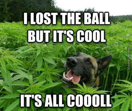 Wow. Such Weed. Very Calm. So Nice. Wow