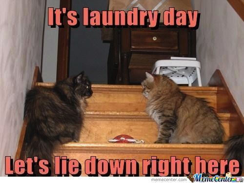 Yeah!! It's Laundry Day!!
